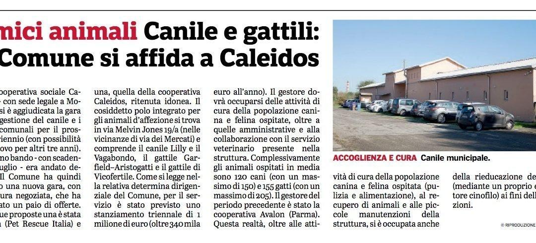Canili e gattili: il Comune di Parma si affida a Caleidos